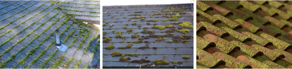 Moss on roofs.